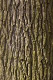 Oak Tree Bark Stock Photography