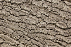 Oak tree bark Stock Photos