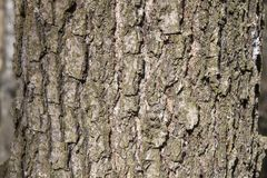 Oak tree bark for nature background Stock Photography