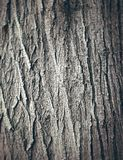 Oak tree bark texture Stock Photo