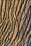 Oak tree bark. Texture closeup with shadows in contrast and warm light in sunset stock photography