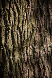 Oak Tree Bark Royalty Free Stock Image