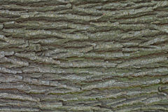 Oak tree bark texture Royalty Free Stock Photography