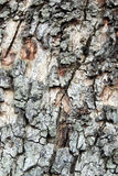 Oak tree bark texture Stock Photos
