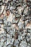 Oak tree bark texture Stock Photos