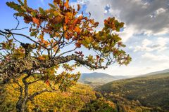 Free Oak Tree Branch On Plancheskiye Rocks At Sunset. Scenic Sunny Blue Sky Golden Autumn Landscape Of Caucasus Mountain Forest At Stock Images - 156871534