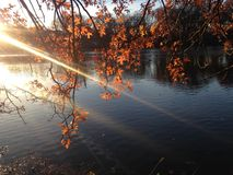 Oak Tree Branches with Colorful Leaves in front of a Lake in the Sun in the Fall. Royalty Free Stock Photography