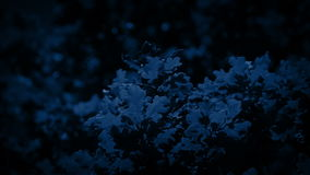 Oak Tree Branches At Night Closeup. Oak tree branches with leaves lit up by moonlight stock video footage