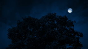 Oak Tree In Breeze At Night. Dramatic night scene with large tree under a full moon stock footage
