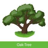 Oak-Tree cartoon icon