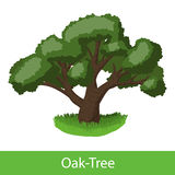 Oak-Tree cartoon icon vector illustration