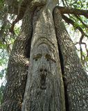 Oak Tree Carving - Suwannee River. A face like carving in a live oak tree at the Ivey Memorial Park along the Suwannee River in Branford, Florida. Chain saw Royalty Free Stock Image