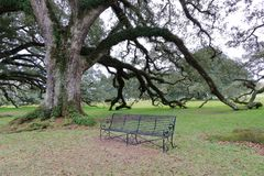 Oak tree and a chair in New Orleans, Louisiana royalty free stock image