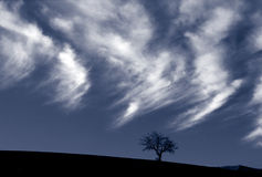 Oak tree and clouds Royalty Free Stock Images