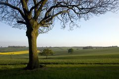 Oak Tree Countryside. Large Oak tree in the foreground with green countryside behind Royalty Free Stock Photos