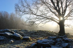 Oak tree in the countryside in winter Royalty Free Stock Images