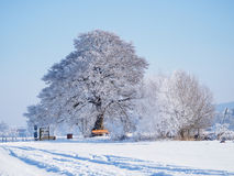 Oak tree covered with snow. A park bench is located under the tree Royalty Free Stock Photo