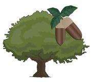 Oak tree. Creative design of oak tree Stock Photos