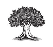 Oak Tree Drawing Vector Logo Design Illustration. Template Stock Photo