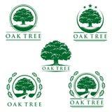 Oak tree eco green logo,  logo design. Eco green, tree logo, oak  logo design Stock Photo