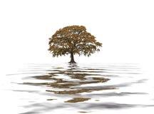 Oak Tree in Fall royalty free illustration
