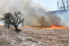 Oak tree and fire. A brush fire approaches an oak tree Royalty Free Stock Photo