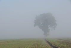 Oak tree in fog Stock Images