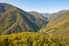 Oak tree forest landscape in Asturias. Muniellos viewpoint. Bear Royalty Free Stock Photography