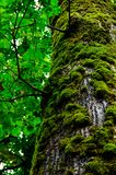 How life looks like. This is a oak tree, in a forest from Romania. The pictures is structured on green color, the color of life, renewal, nature, and energy and royalty free stock photos
