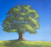 Oak tree in full leaf in summer standing alone Royalty Free Stock Images