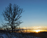 Oak Tree and Golden Sunset. An image depicting a golden sunset silhouetting a young Oak tree and native prairie grass in winter Royalty Free Stock Photo