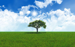Oak tree in grassy landscape 2701 Royalty Free Stock Photography