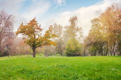 Oak tree on the grassy park meadow. Lovely foggy autumn nature scenery Stock Photo