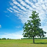 Oak tree on green meadow and sky Royalty Free Stock Images