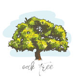 Oak tree hand drawn vector illustration Royalty Free Stock Images
