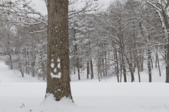 Oak Tree With Happy Snow Face in Winter Woodland Royalty Free Stock Photography