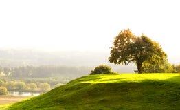 Oak tree on Hill Stock Image