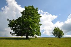 Oak tree on a hill. With beautiful sky Royalty Free Stock Photography