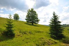 Oak tree on a hill. With beautiful sky and two fir trees Stock Photography