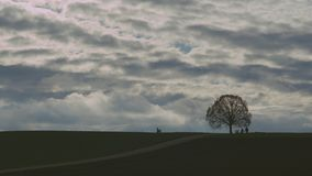 Oak tree on a hill time lapse. Time lapse of an oak tree on a hill in winter with heavy dramatic clouds and people passing by at sunset stock footage