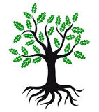 Oak tree icon with green leaves and roots Stock Photography