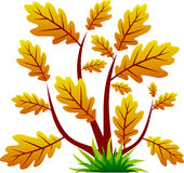 Oak tree icon with leaf. Oak tree isolated on white Royalty Free Stock Image
