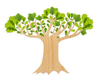Oak tree isolated Royalty Free Stock Photo