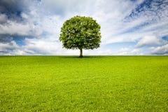 Oak Tree in Landscape stock photo