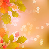 Oak Tree Leaves of Autumn. Oak tree Leaves on a Warm Colored Background of Autumn Stock Image