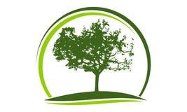 Oak Tree Logo Design Template. Vector Stock Image