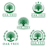 Oak Tree logo,  logo design Stock Photography