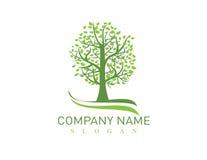 Oak tree logo. On white background Stock Photos