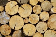 Oak tree logs. Wood cuts. Chopped firewood. Deforestation background royalty free stock photos