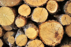 Oak tree lumber Stock Images